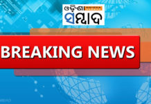 3 People Killed In Elephant Attack Bargarh